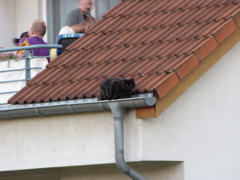 Cat on roof.