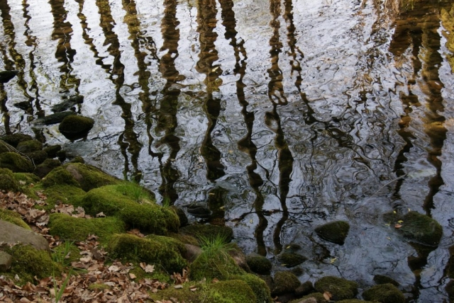Black Forest, reflection, trees, water stream