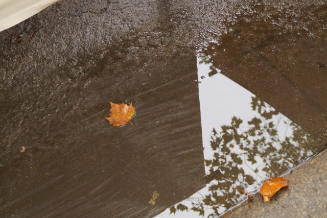 Berlin, weekly market, reflection, puddle, leaves